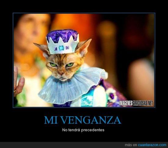 animal,disfraz,gato,mascotas,venganza