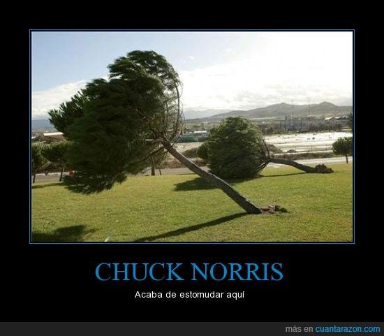 aire,árbol,chuck norris,estornudo,inclinado,torcido