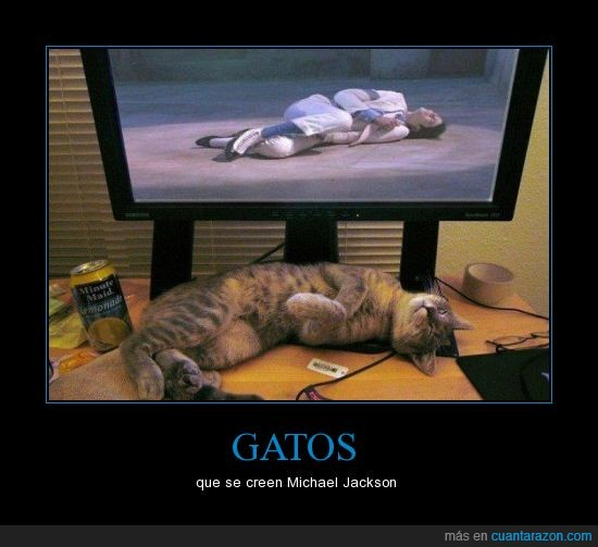 gatos,Michael Jackson,Pop,Rey