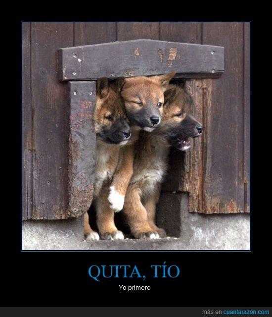 entrar,estorbar,perro,puerta,salir