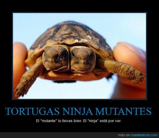 dos cabezas,mutante,ninja,photoshop,real,son las fabulosas tortugas ninja,tortuga