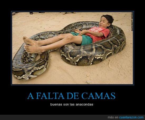 acostar,anaconda,cama,grande,niño,serpiente,siestecita letal
