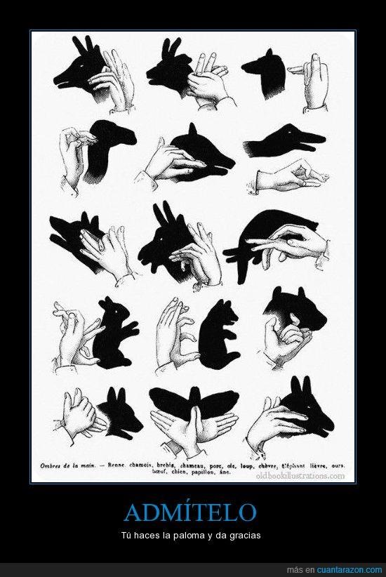 animales,jugar,luz,mano,pared,sombra