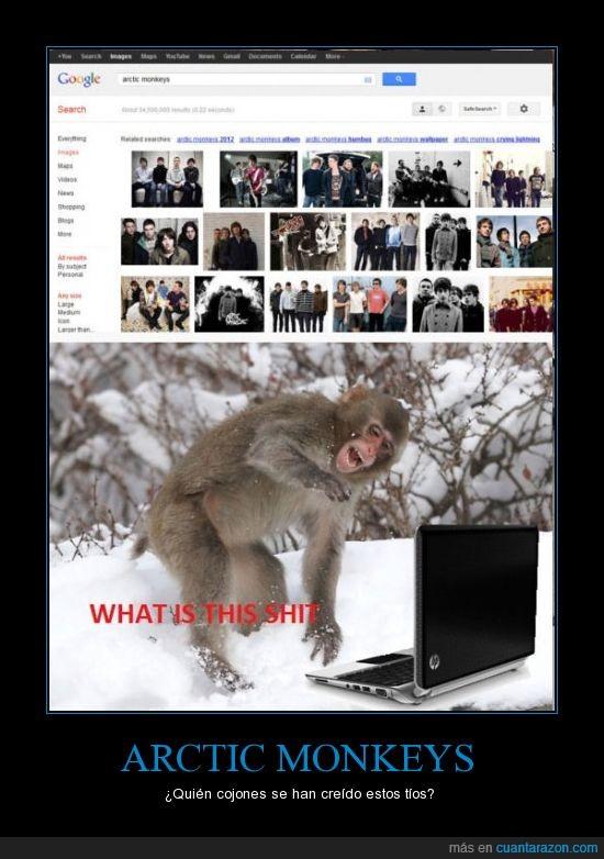 arctic,artico,frio,monkeys,mono,nieve,ordenador,what is this shit