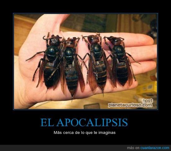 apocalipsis,avispas,espero que sea photoshop,futuro,gigante