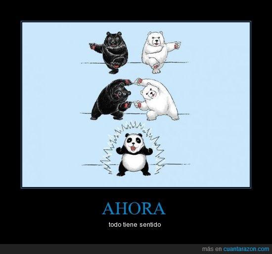 camiseta,fusión,osos,panda