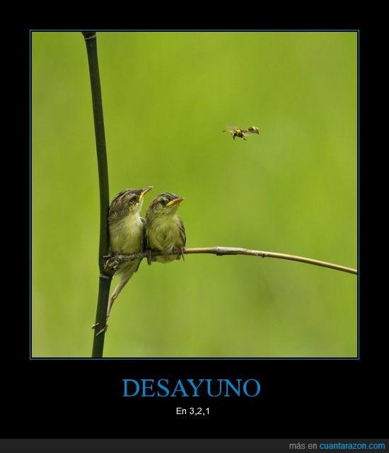 comida,insectos,pájaros,volar