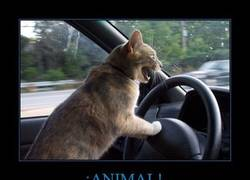 Enlace a ¡ANIMAL!