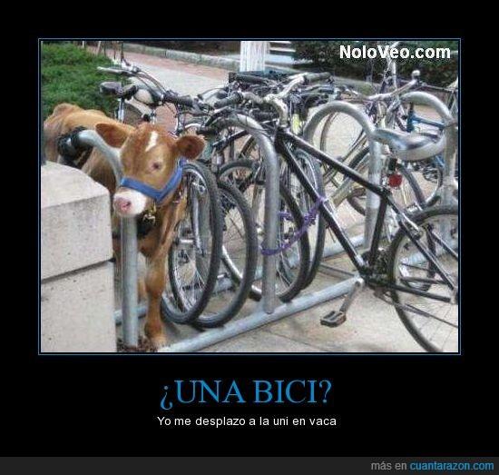 bici,vaca