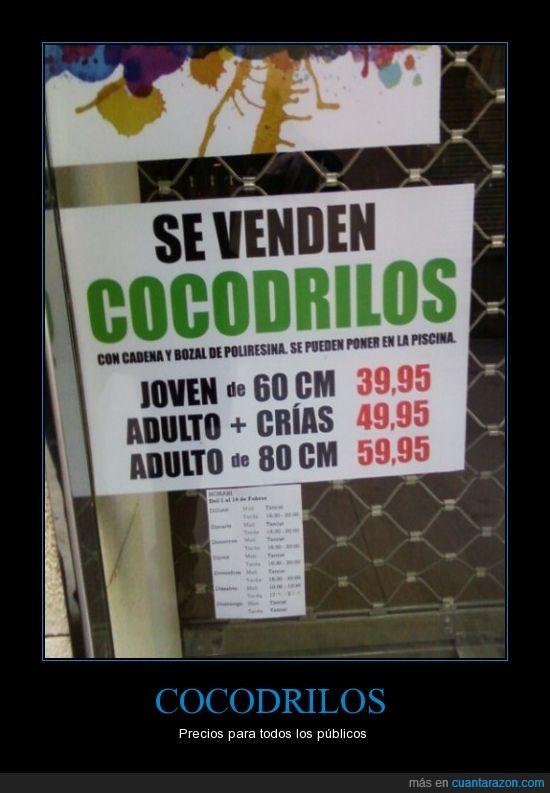 centimetro,cocodrilo,por fin,precio,tamaño,tienda,vende