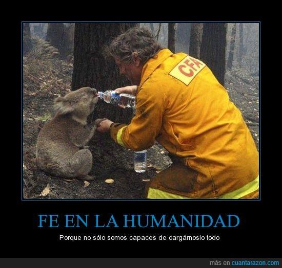 agua,ayudar,bombero,incendio,koala,no al maltrato animal,ser persona