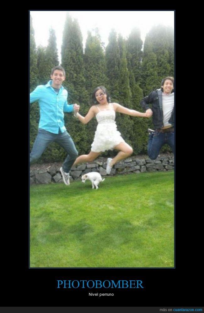 cesped,foto,perro,salto