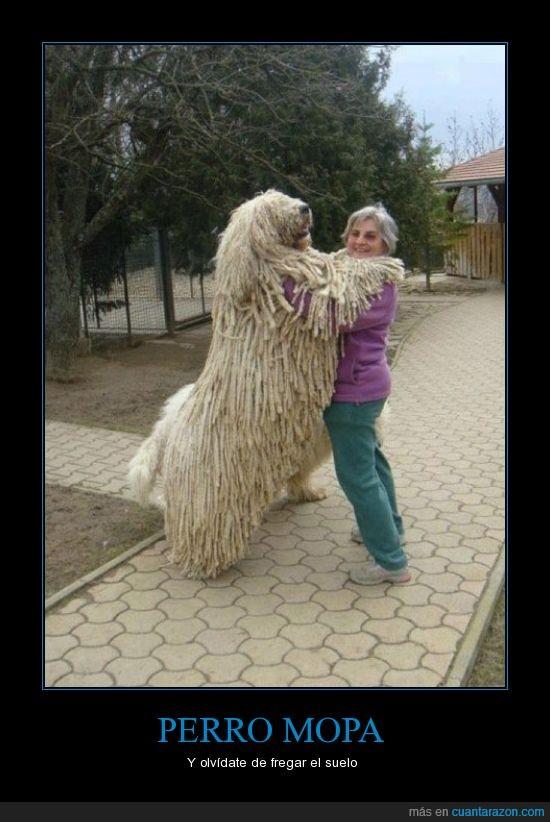 abrazo,fregar,mopa,perro