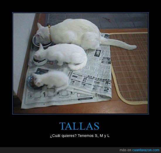 gatos,tallas,uuuuh