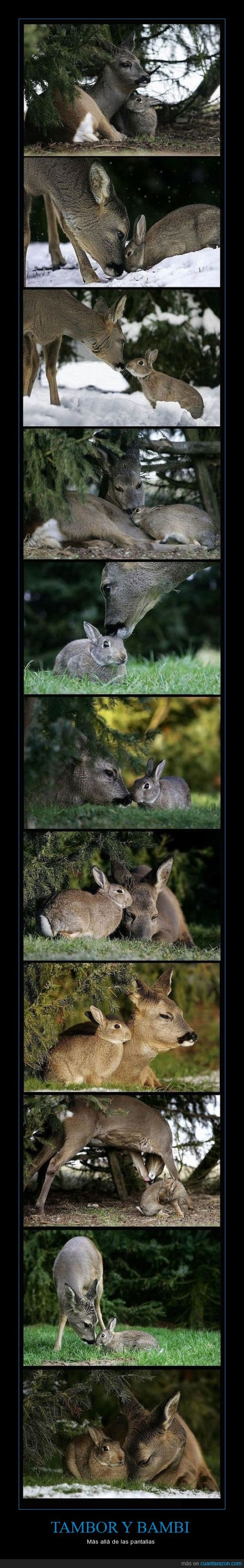 amistad,bambi,cariño,realidad,tambor