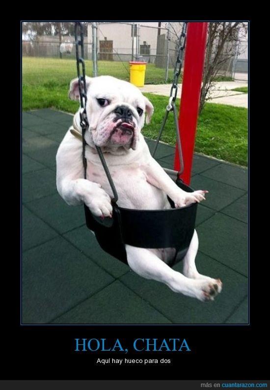 columpio,parque,perro