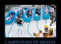 Enlace a CAMPEONATO DE SIESTAS