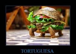 Enlace a TORTUGUESA