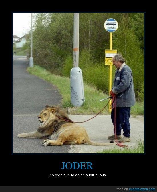 bus,carretera,cuerda,hombre,león