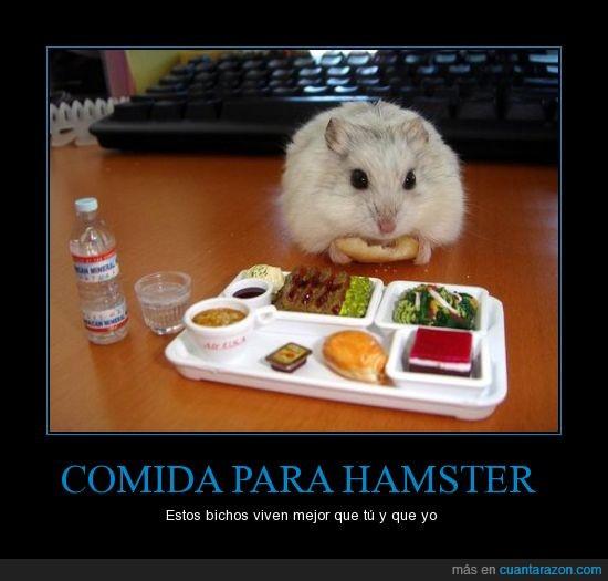 bandeja,comida,hamster,wtf
