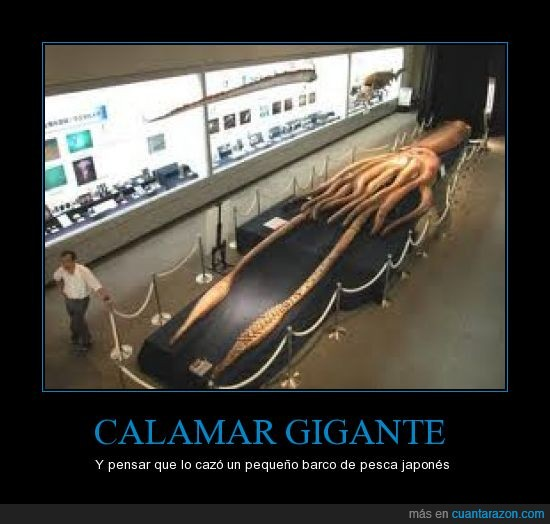 calamar,existe,gigante,japón,kraken,largo