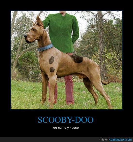 dibujo,gran danes,grande,manchas,perro,scooby doo