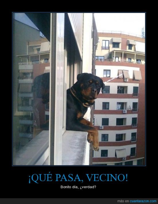 asomado,balcón,perro,vecino