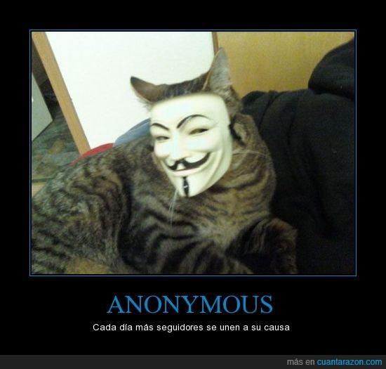 anonymous,gato,mascara,v,vendetta