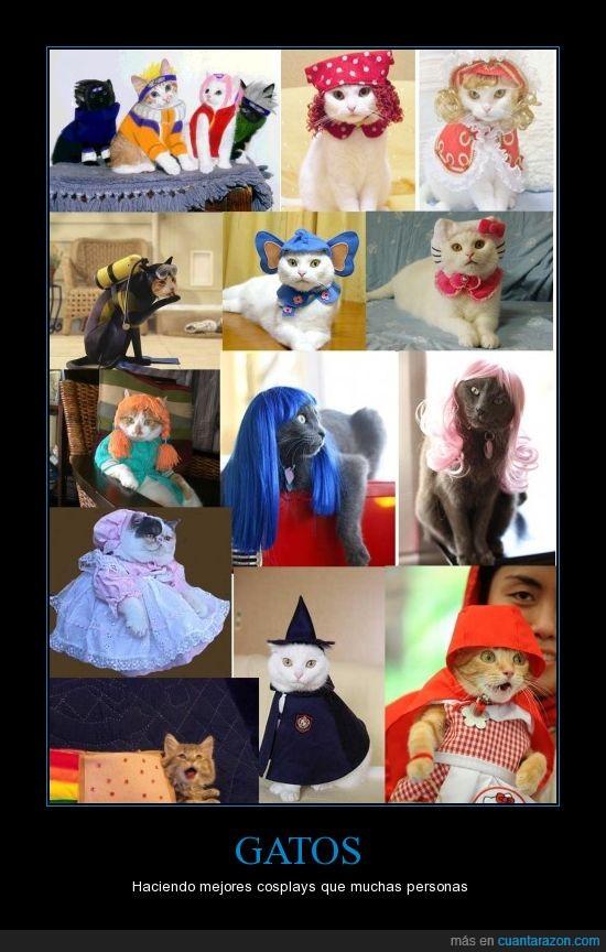 caperucita,cosplay,disfraz,gatos,naruto,peluca