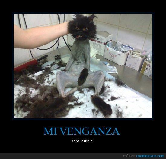 afeitar,corte,gato,muerto,pelo,venganza
