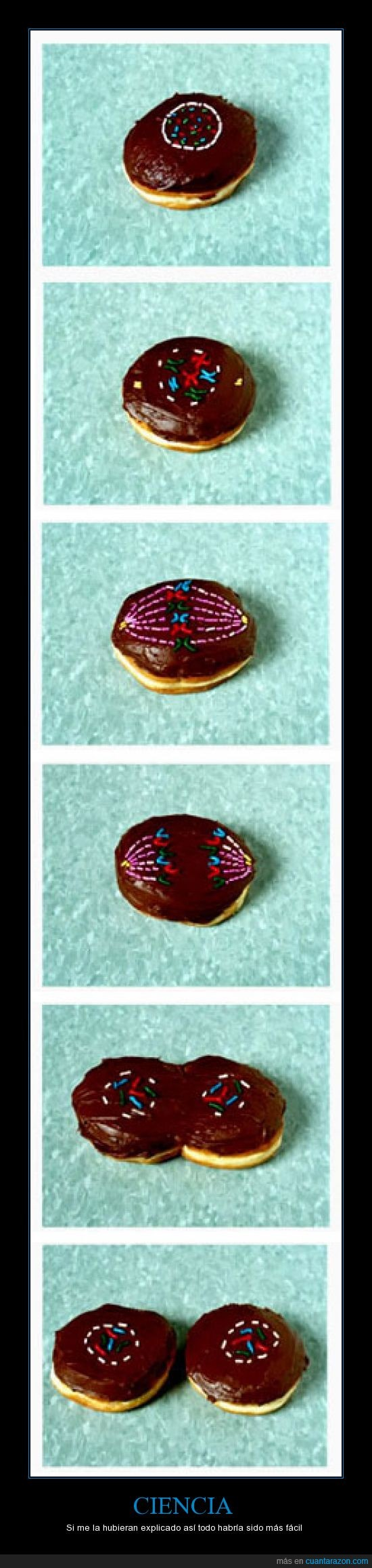 celulas,chocolate,crecer,división,donutm nutella,dulce,explicación,mitosis,reproducción