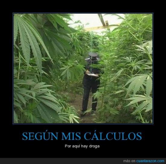 calculos,ciego,droga,mapa,maria,marihuana,policia