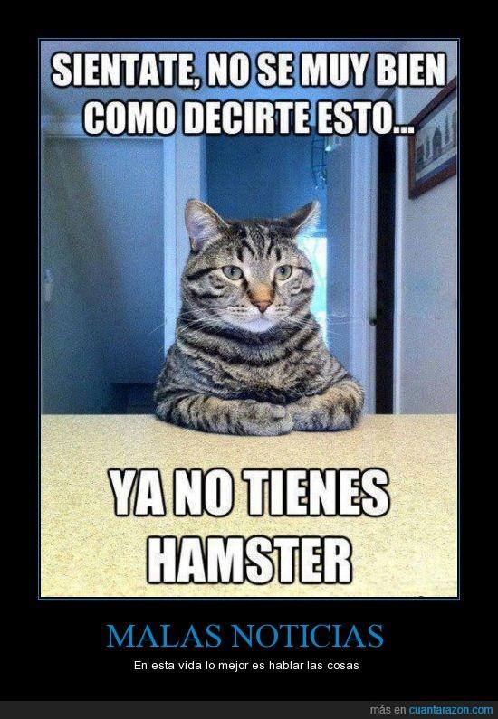 gato,hamster,mala notica,muerte