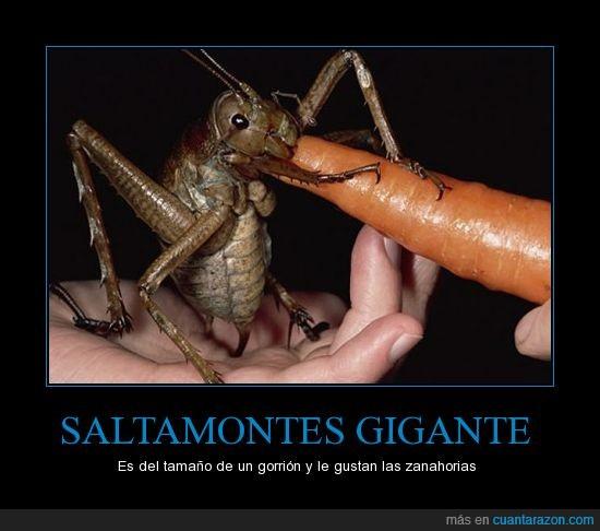 gigantes,gorrión,insectos,que miedaco,zanahoria
