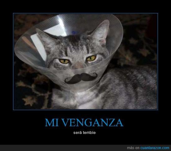 bigote,cute,dolor,gato,pintado,terrible,venganza