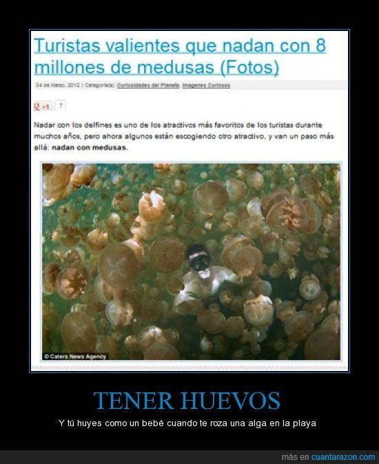 medusas,miedo,nadar,turistas