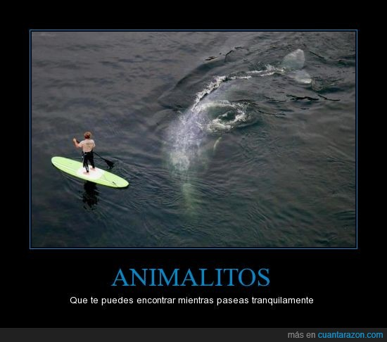 animales,ballena,mar,Surf