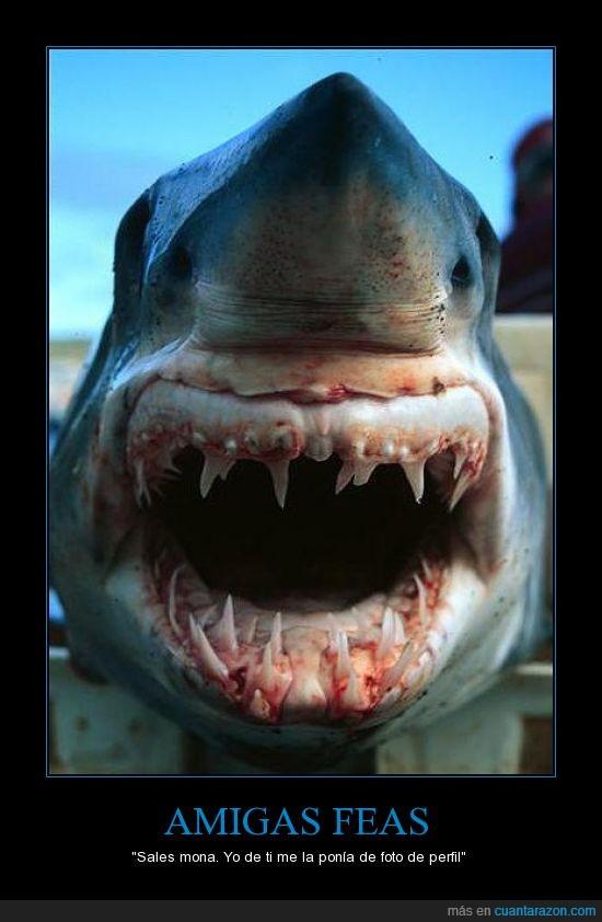 amiga,colmillos,diente,fea,muerte,necesitas aparatos,perfil,tiburon,tuenti