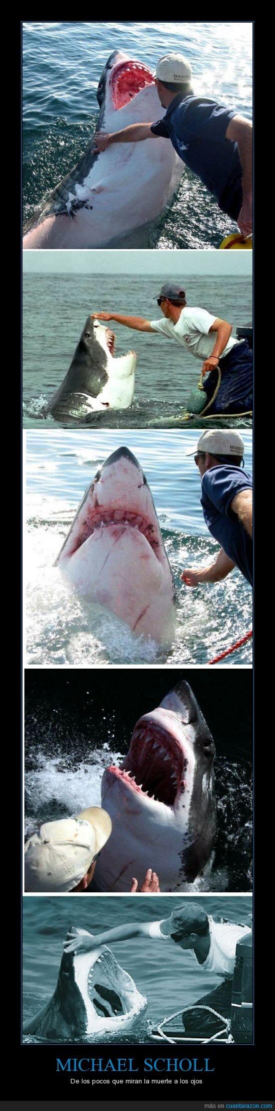 blanco,dientes,los tiene cuadrados,michael scholl,muerte,tiburon,tocar