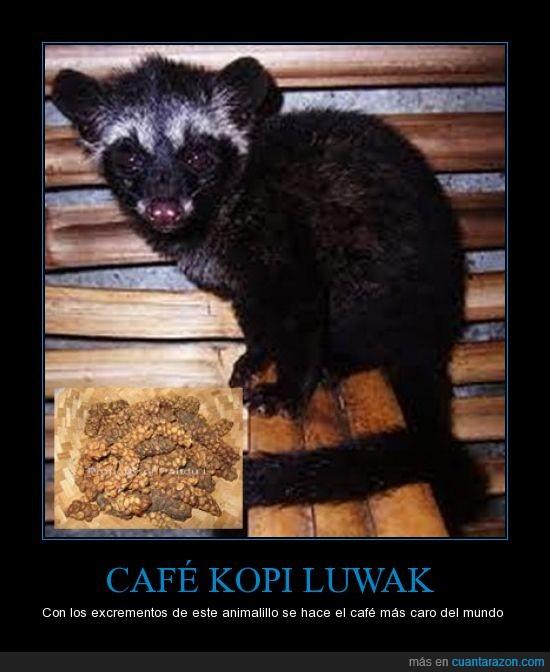 café,excrementos,kopi,kopi luwak,luwak