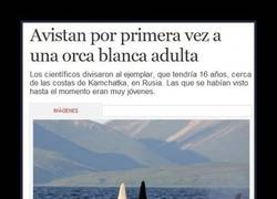 Enlace a MOBY DICK