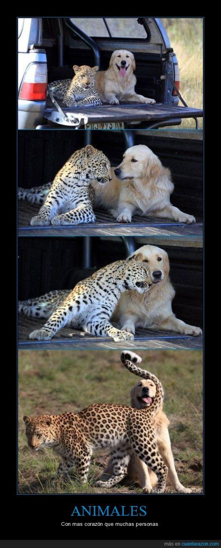 amistad,animales,leopardo,perro