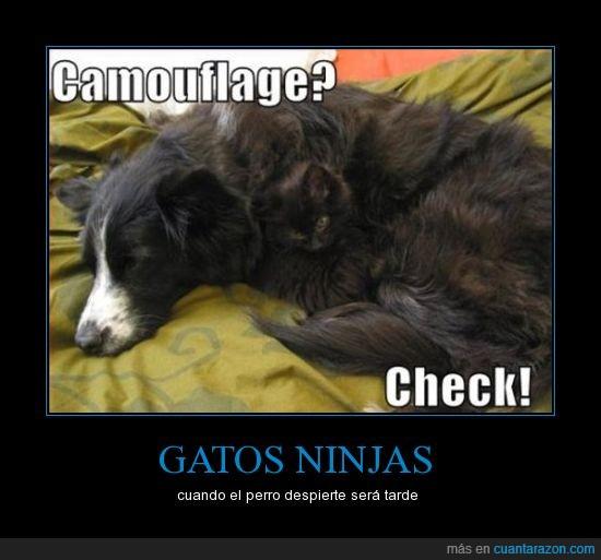 camuflaje,gato,ninja,perro