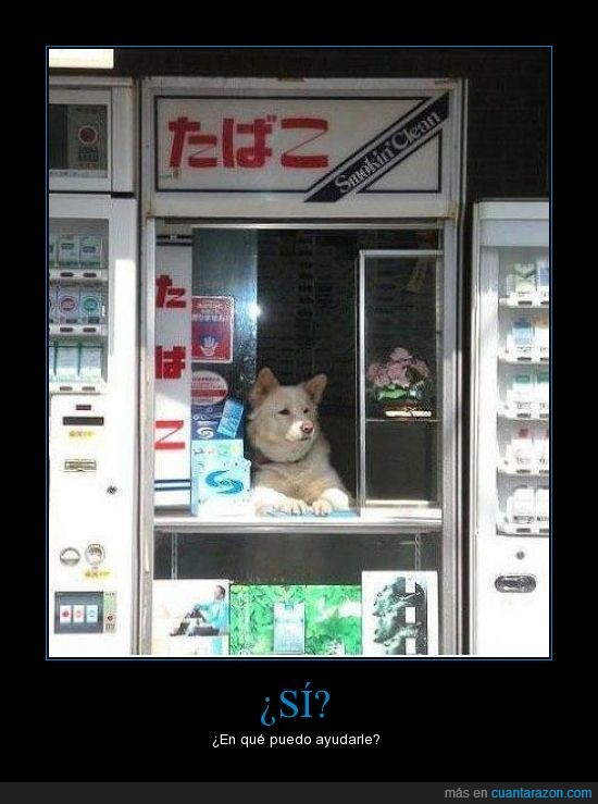 dependiente,japón,perro,tabaco,tienda