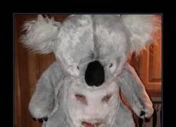 Enlace a KOALA MAN