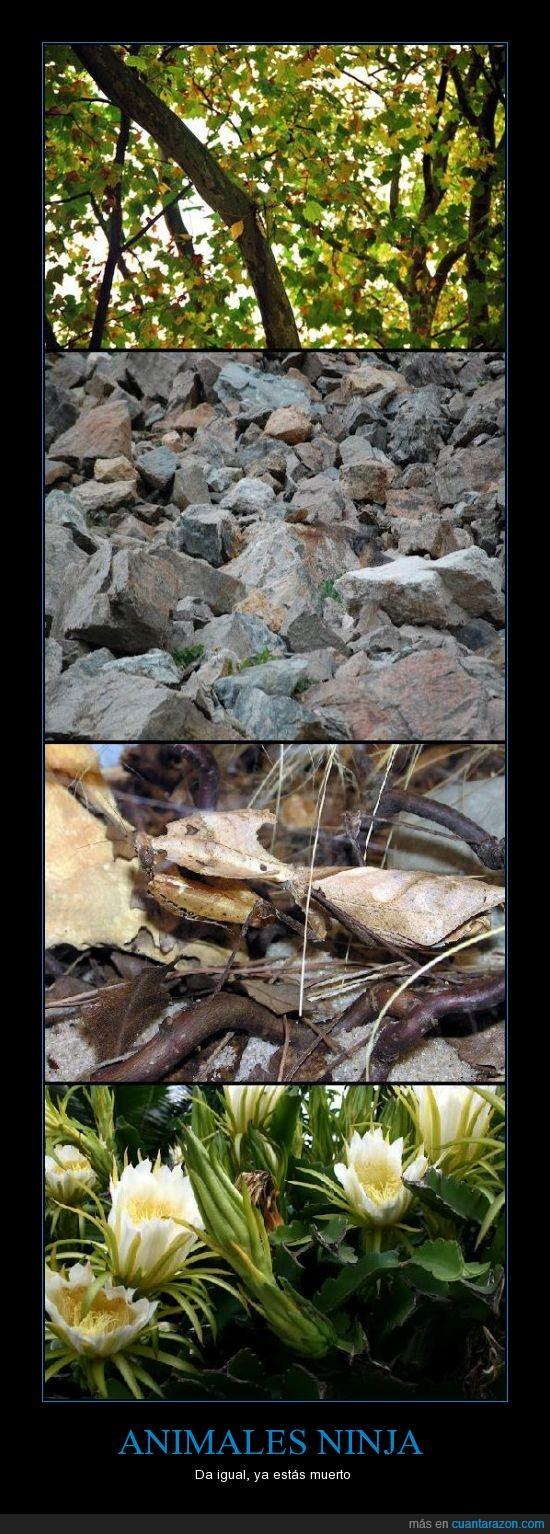 animales,aves,bicho palo,camuflados,lagartija,naturaleza,raton