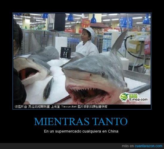 china,supermercado,tiburones