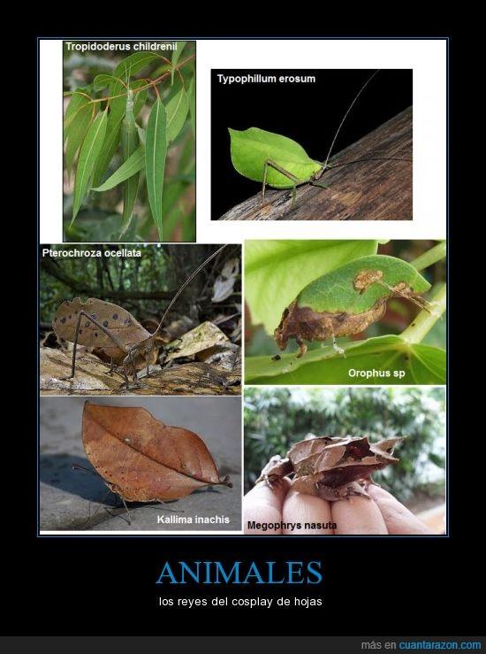 bicho,camuflaje,hojas,insectos,ninja,plantas