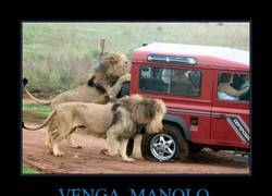 Enlace a VENGA, MANOLO