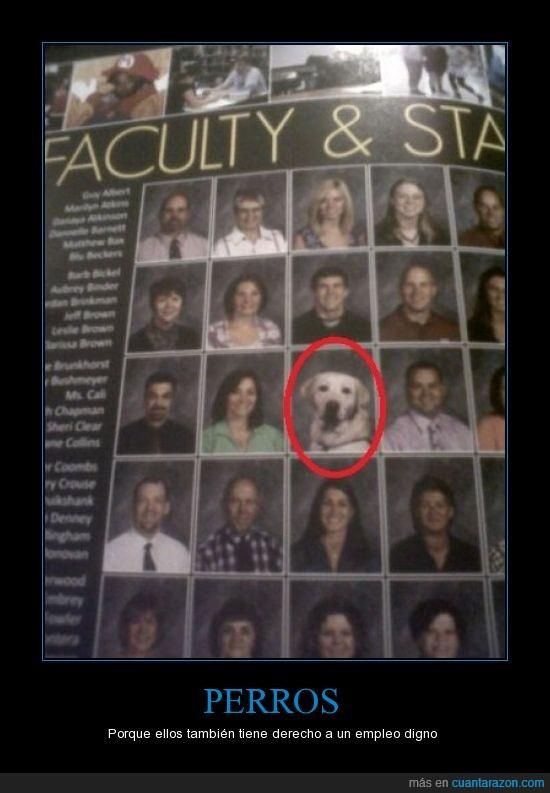 derecho,facultad,foto,perro